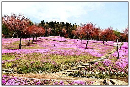 瀧上芝櫻公園-49