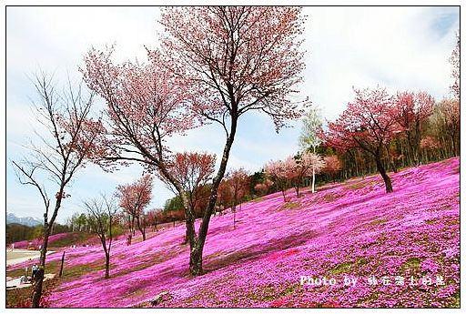 瀧上芝櫻公園-10