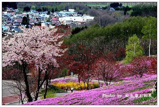 瀧上芝櫻公園-21
