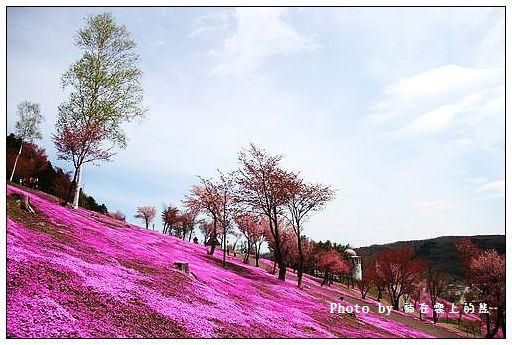 瀧上芝櫻公園-40