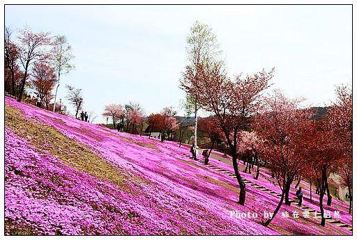 瀧上芝櫻公園-37