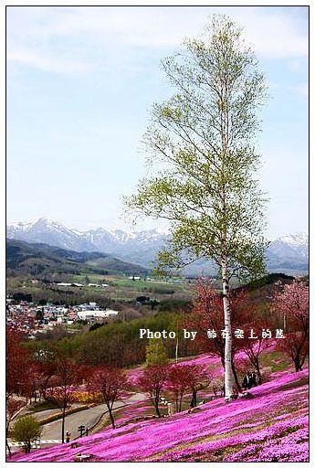 瀧上芝櫻公園-25