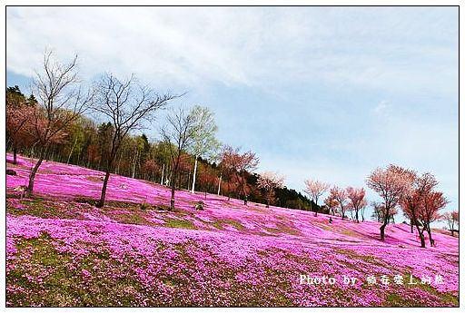 瀧上芝櫻公園-50
