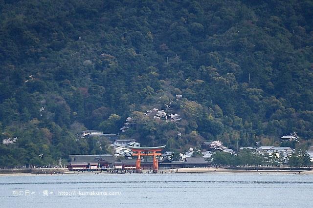 廣島嚴島神社-K24A4523