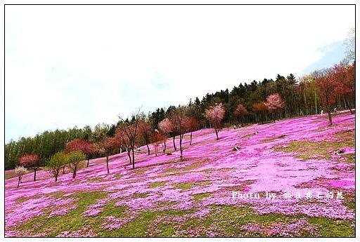 瀧上芝櫻公園-53