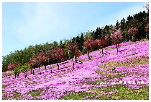 瀧上芝櫻公園-56