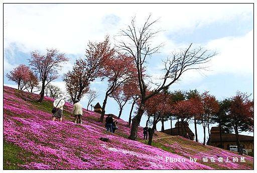 瀧上芝櫻公園-05