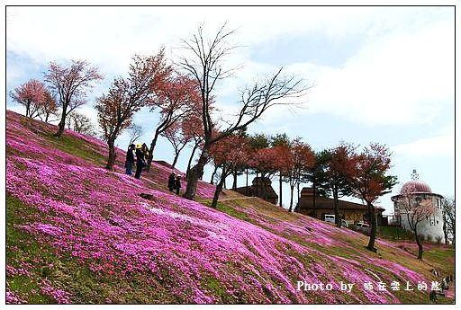 瀧上芝櫻公園-04