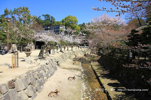 廣島嚴島神社-IMG_7271