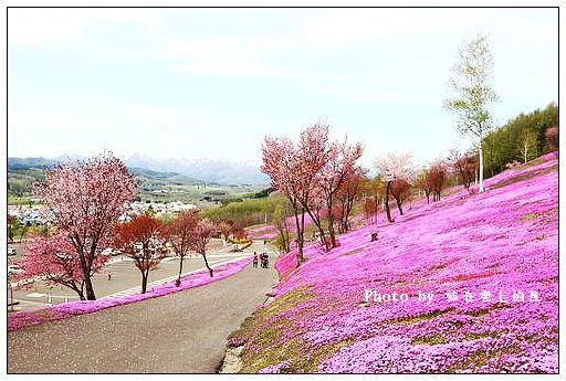 瀧上芝櫻公園-17