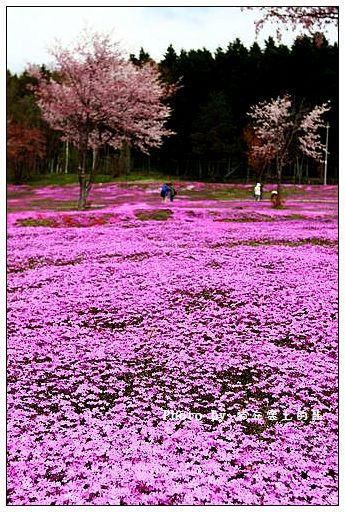 瀧上芝櫻公園-12
